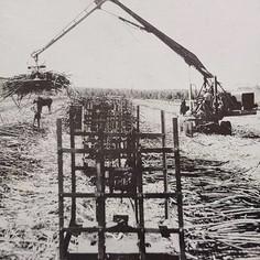Mechanical loading of cane.
