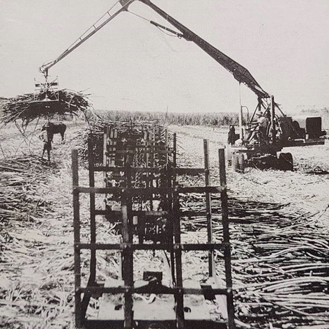 Mechanical loading of cane.