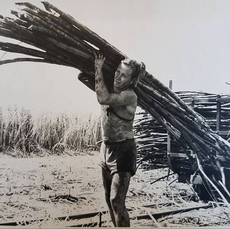 Cane cutting. Empire Vale. 1960s
