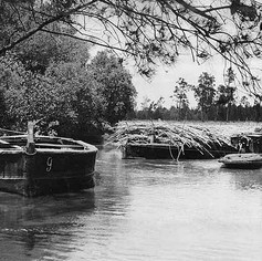 Barges being loaded with cane