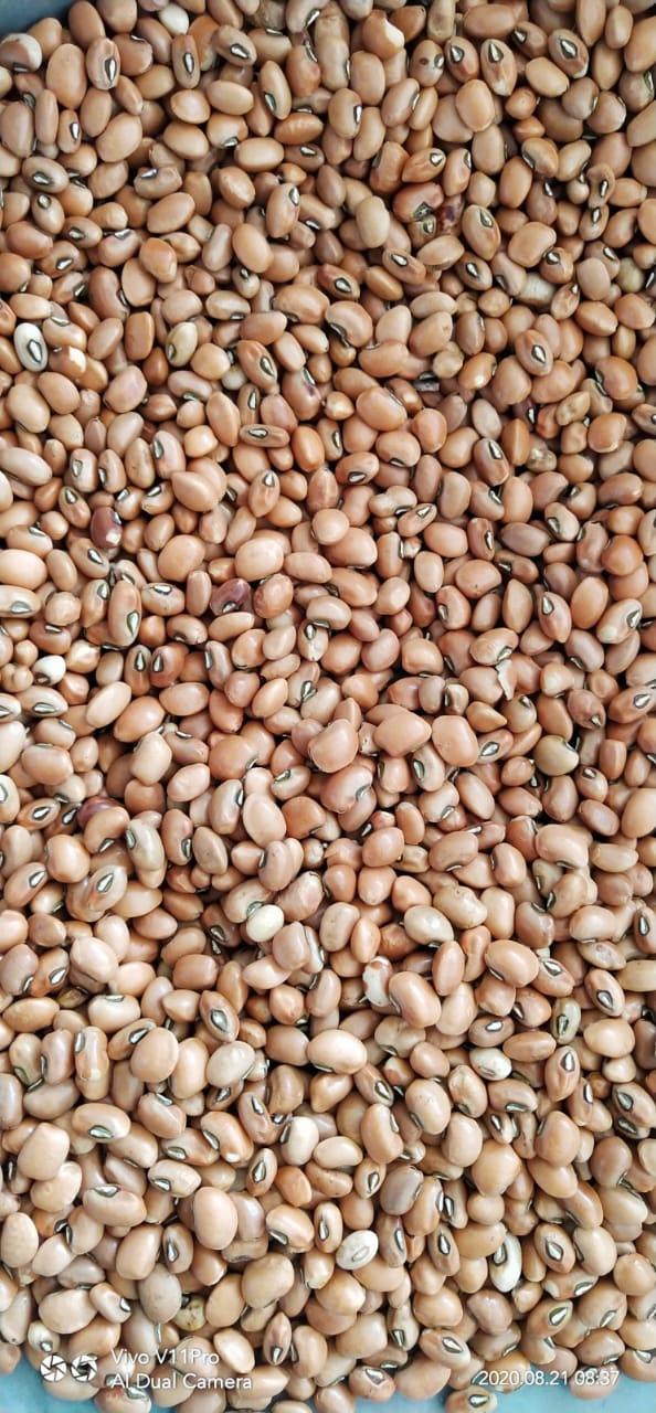 sscs-storage-grains1
