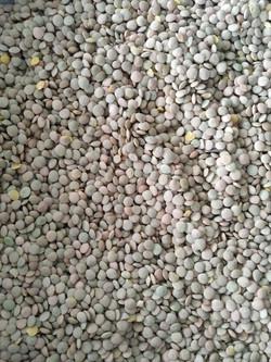sscs-storage-grains4