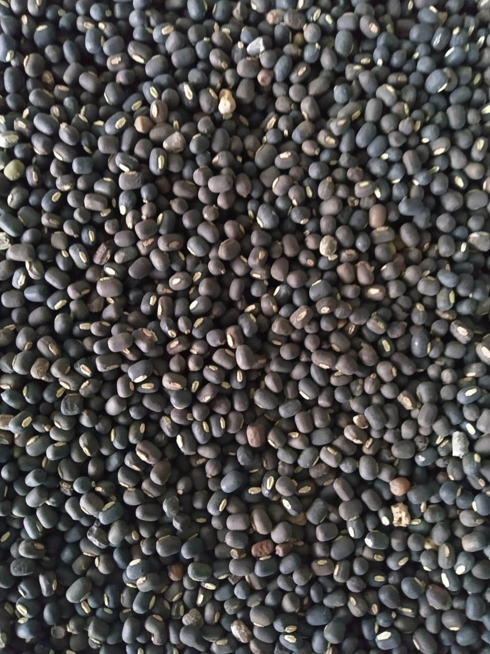 sscs-storage-grains5