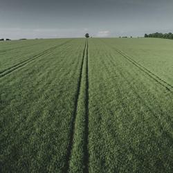 Lone Tree, Salisbury Plain
