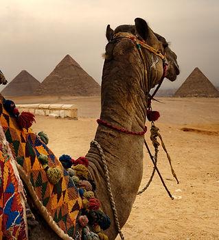 Camel and Pyramids