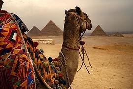 Kameel en piramides