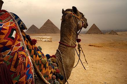 Kamel og pyramider