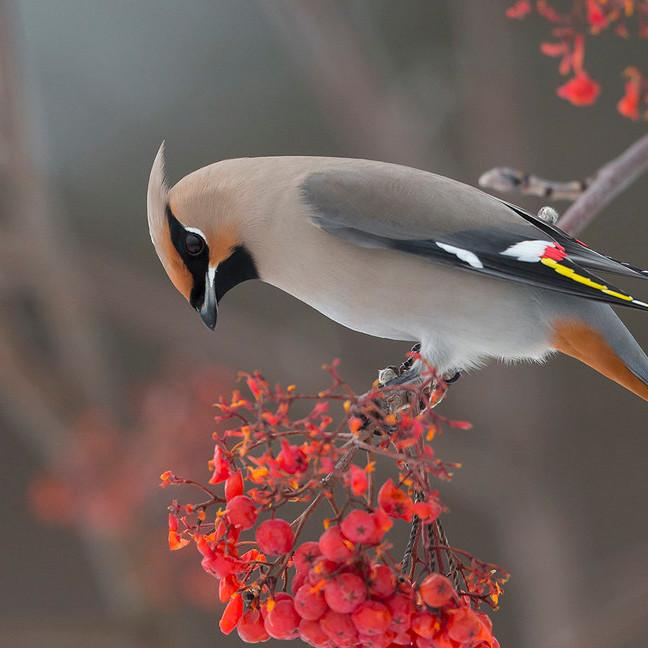 Cambridge Bird Sale