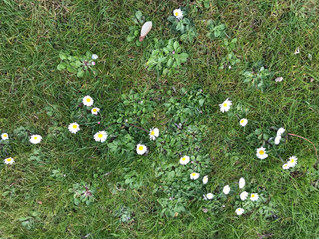 Dans mon jardin confiné... day#32
