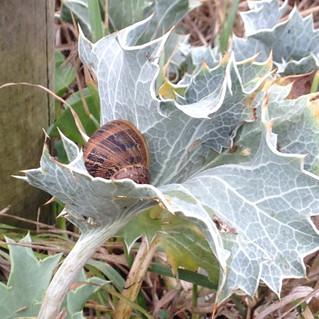 Dans mon jardin confiné...day#14