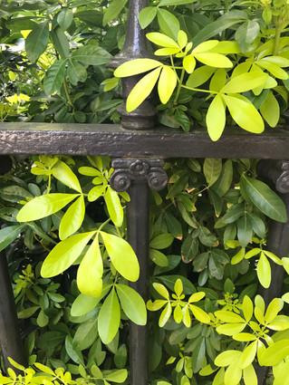 Dans mon jardin confiné...day#31