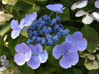 Dans mon jardin confiné...day#16