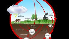 A Adubação Nitrogenada na Agricultura