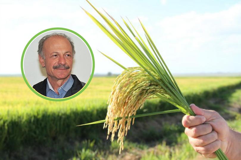 Arroz, Porque Irrigar: Conversa com o Especialista
