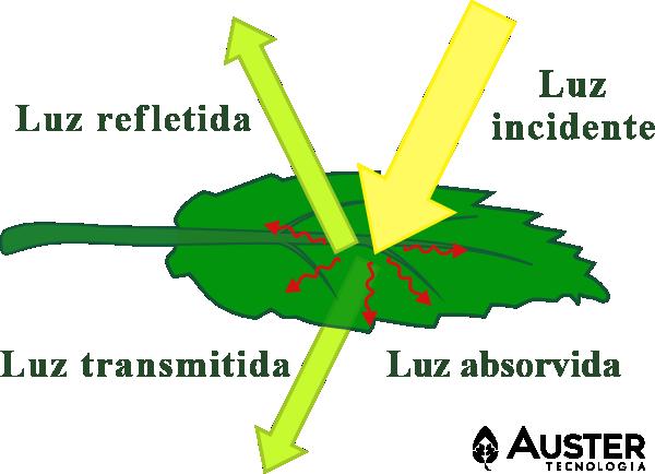 Diagrama da interação da radiação solar com uma folha - Auster Tecnologia