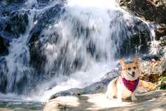 Pet Photography, 寵物攝影,狗狗攝影