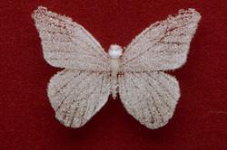 Mariposa mori detail