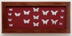 Mariposa mori