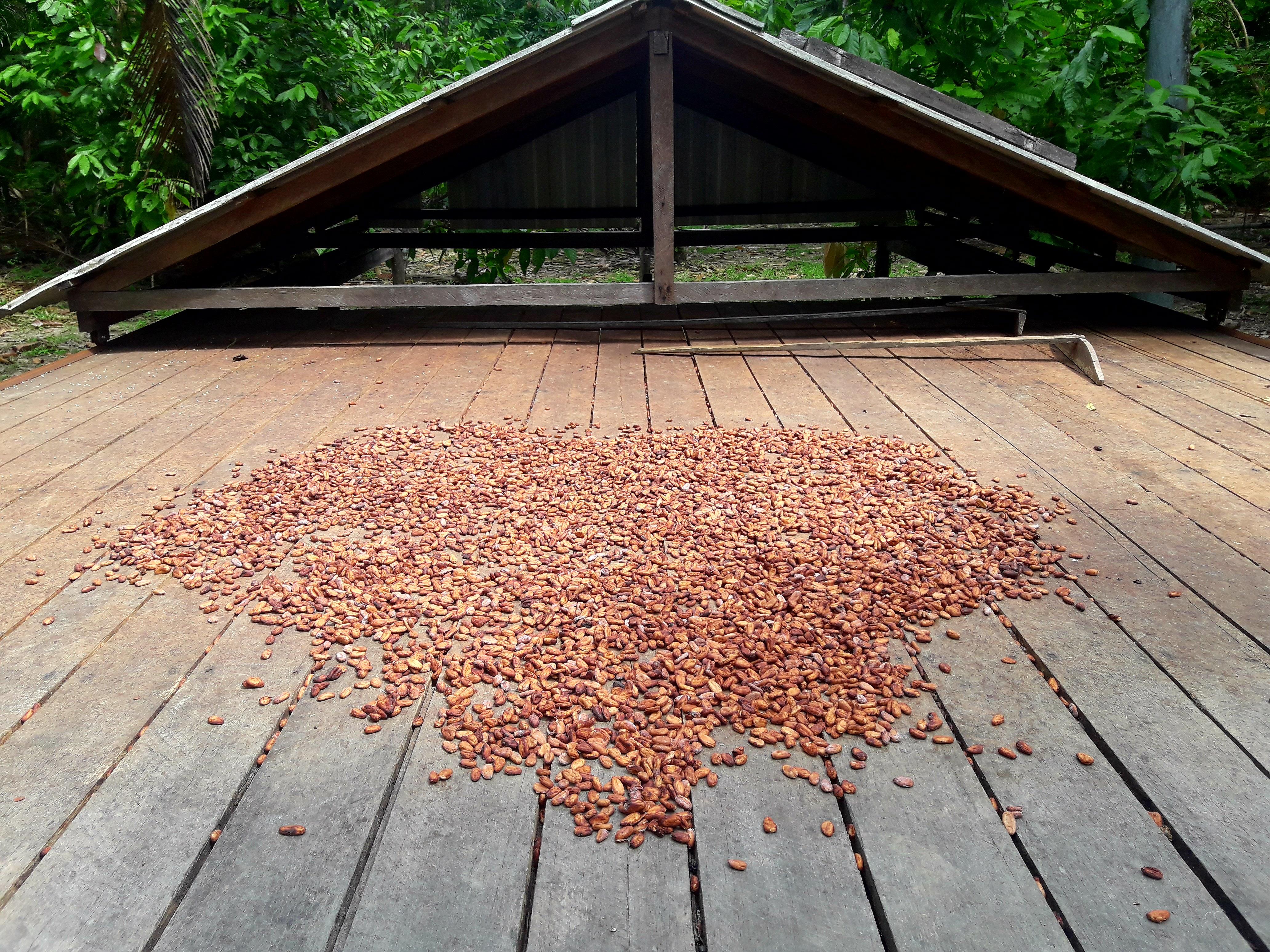 Secagem da semente