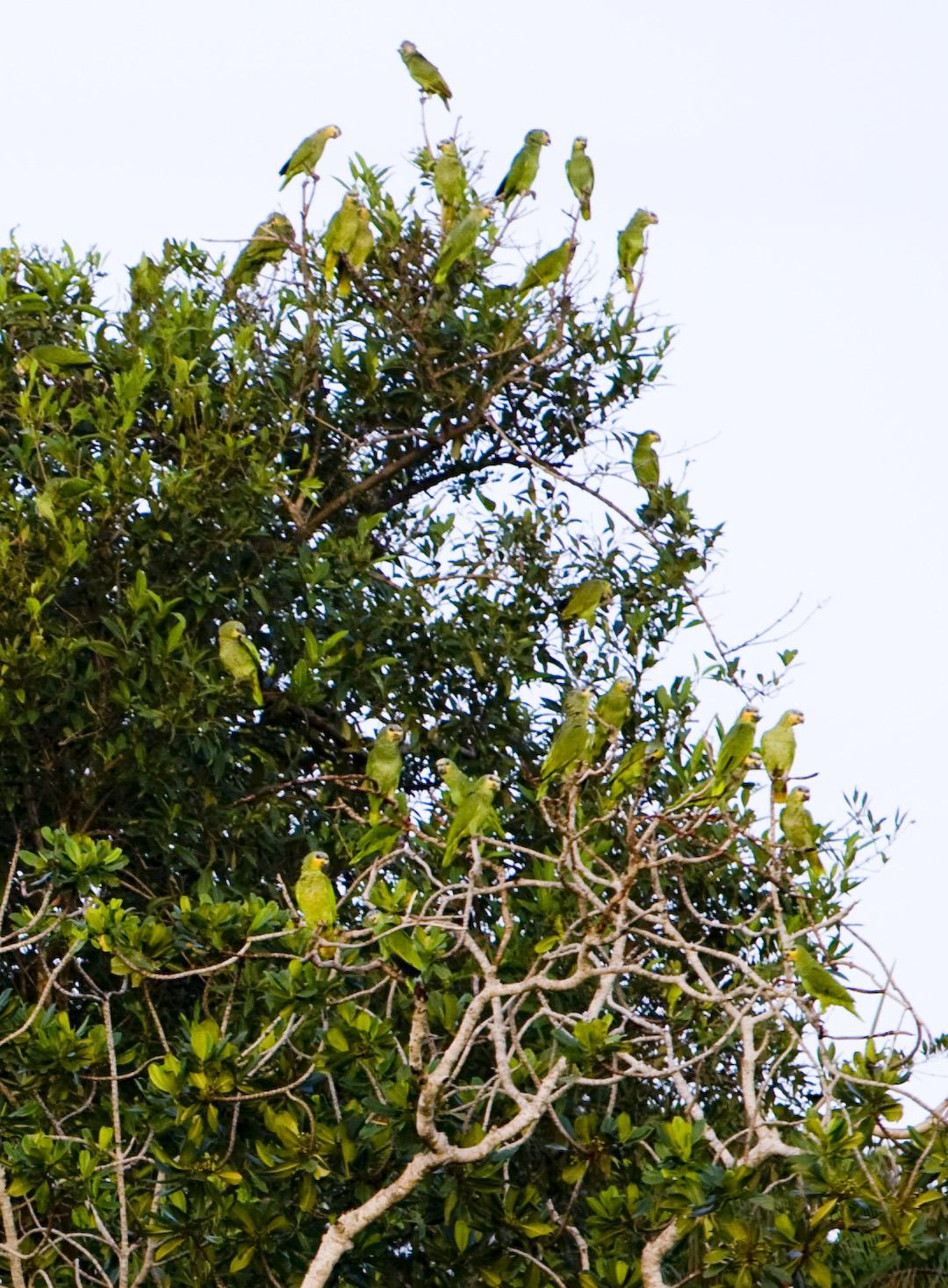 Ilhas do Papagaio