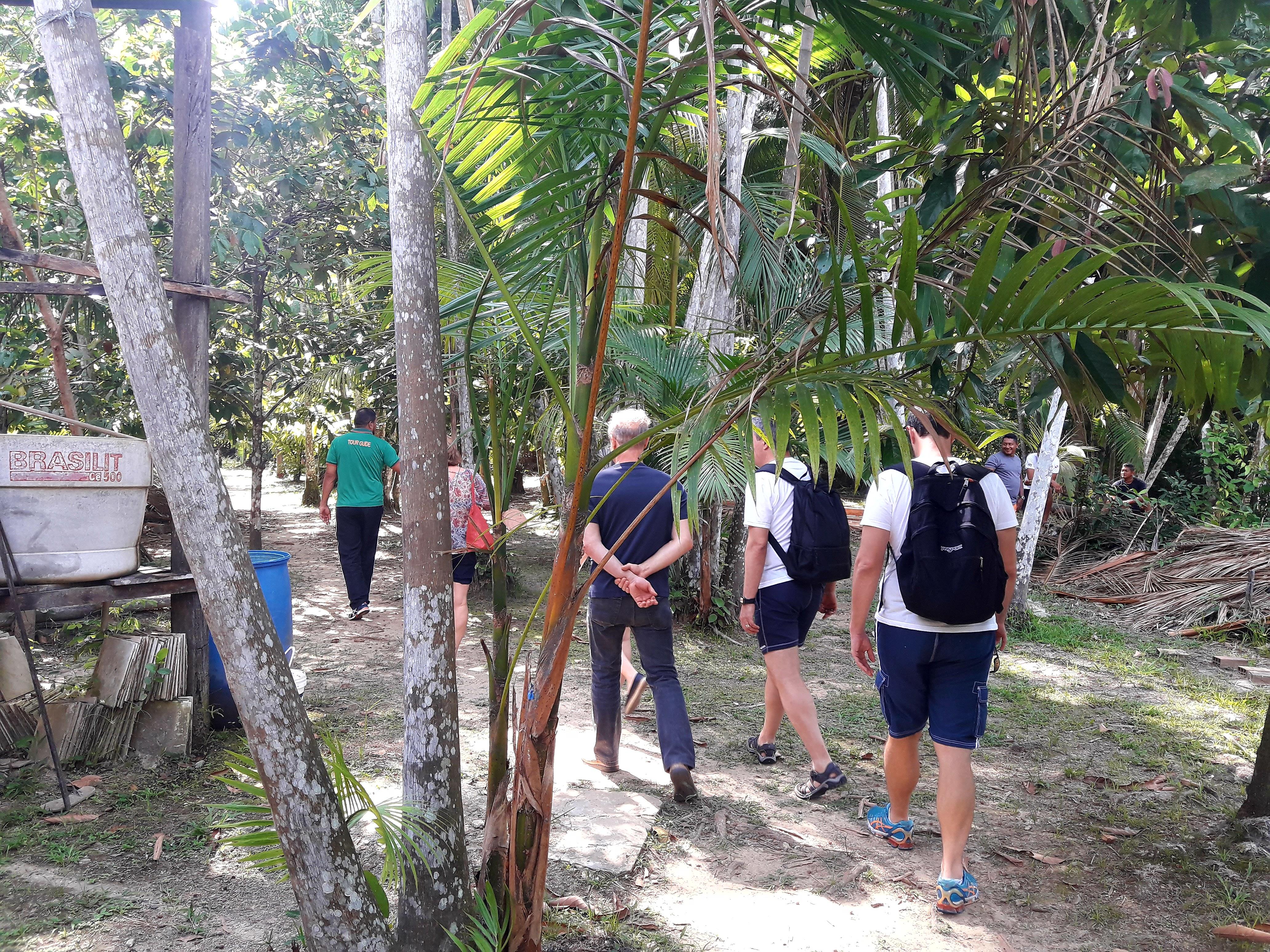 Conhecendo a plantação de Cacau
