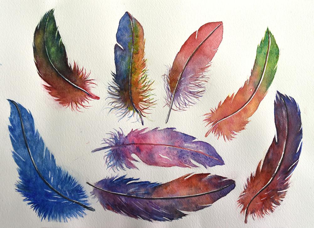 Etude de plumes