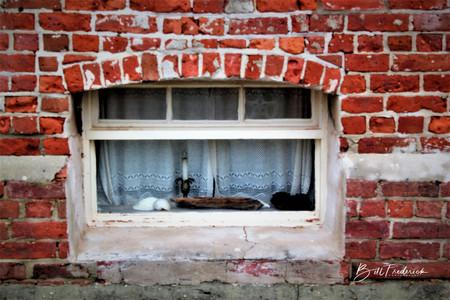 a brick window with sign.jpg
