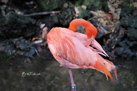 flamingo 4 WITH SIGN copy.jpg