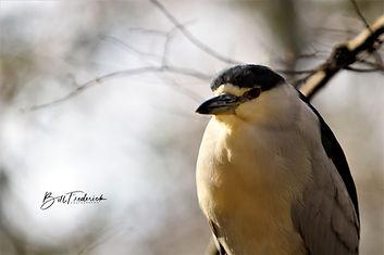 homosassa tux bird WITH SIGN.jpg