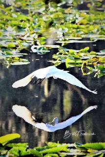 a bird mirror with sign.jpg