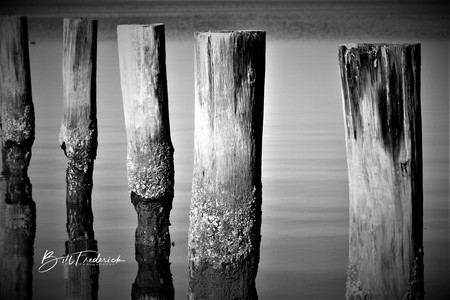 a pilings with sign.jpg