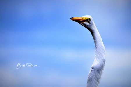 heron head WITH SIGNB.jpg