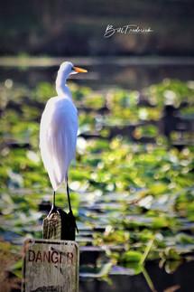 danger bird copy WITH SIGN.jpg
