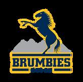 Brumbies.png