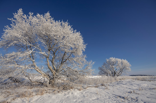 rime covered