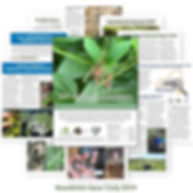 Issue 3 Cover v2.jpg