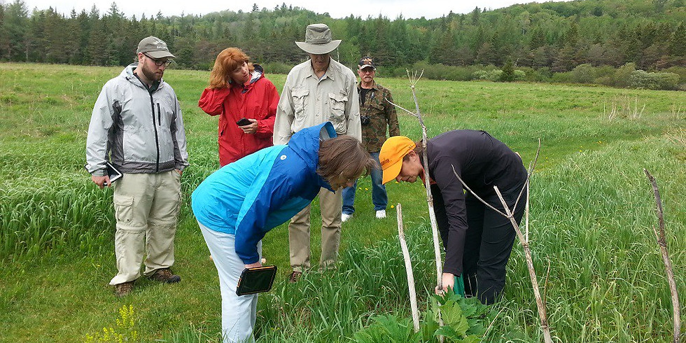 Join the iMap Certified Trainers Network: empowering your community to map invasives