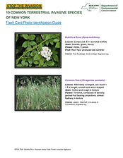 Invasive Plants_Flashcards.png