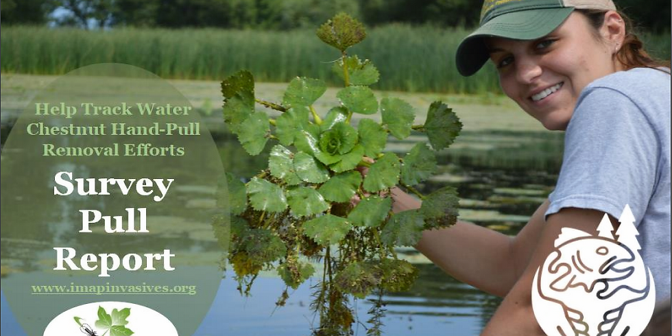 Make Your Efforts Count: Leveraging iMapInvasives to record water chestnut pulls