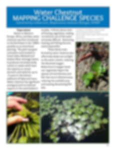iMapInvasives Newsletter 3_070919_Page_1