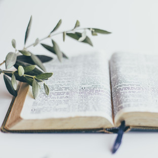 Bible%20and%20olive%20branch_edited.jpg