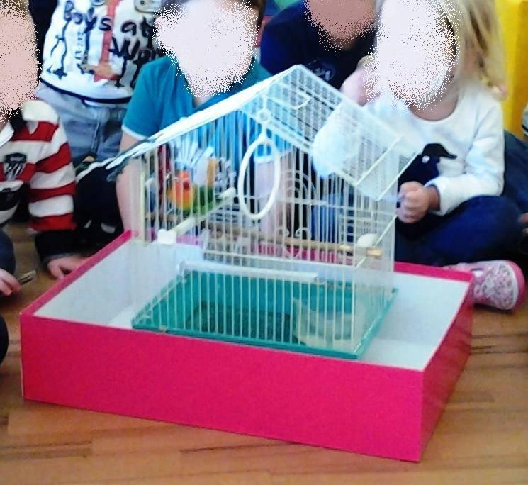 Il pappagallo Sandy in asilo