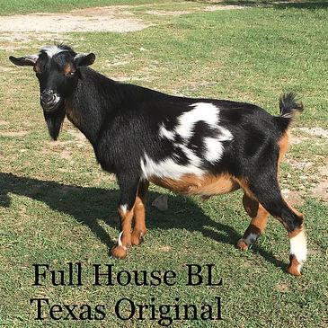 AGS Full House BL Texas Original.jpg