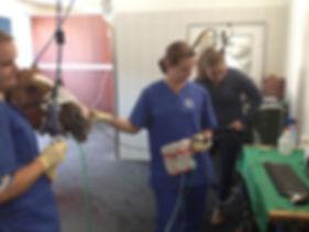 Sinusendoskopie Dr. Isabell Herold