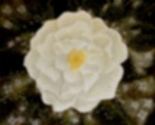Lida Sherafatmand- White Rose- 150 x 120