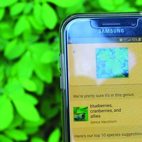 Whistler to Pemberton BioBlitz with iNaturalist