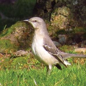 Autumn birds finish year on an unexpected crescendo