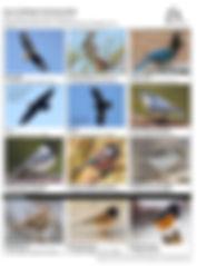 Top 12 Whistler Christmas Birds.jpg