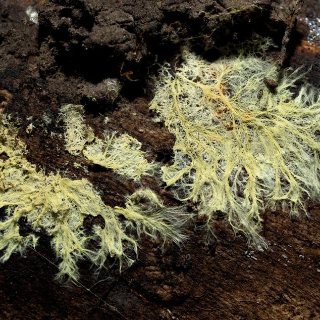 Mycelium D71_8007.jpg