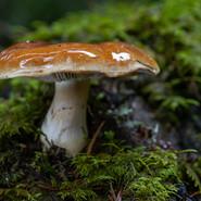 Fungus-JR-201017-049.jpeg